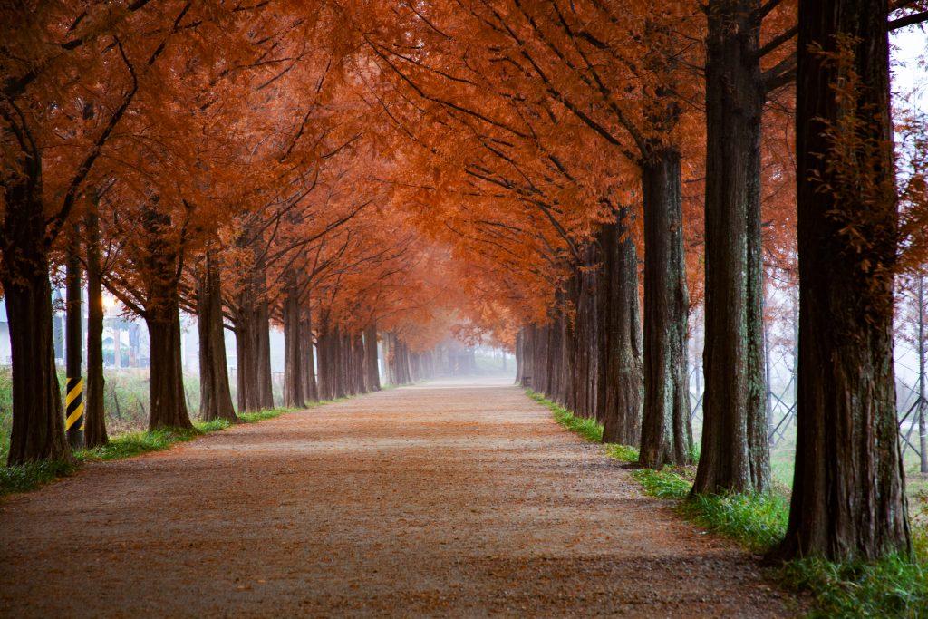 Chemin d'arbre