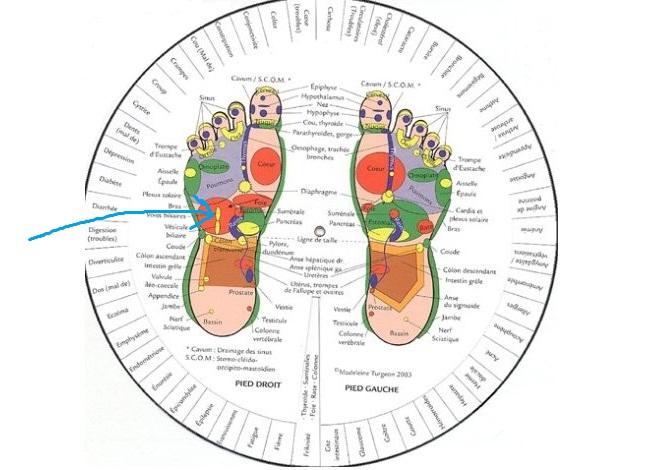 Image tirée d'un ouvrage Madeleine Turgeon, école de réflexologie.