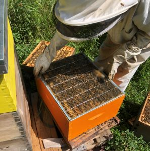 spa eastman honey hives